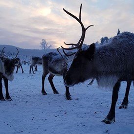Rollstuhl-Urlaub: You get to say hello to the locals! - The Friendly Moose Lapland