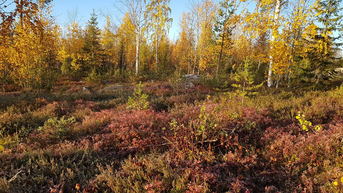 Rollstuhl-Urlaub: Autumn is a beautiful time in the forest.  - The Friendly Moose Lapland